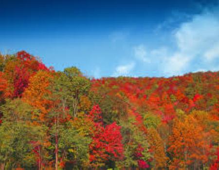 Asheville Leaves Peaking