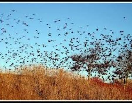 Asheville for the Birds