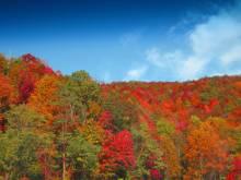 Asheville Autumn Colors