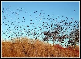 Asheville Birding