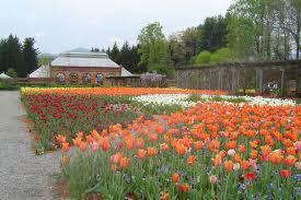 Spring flowers at Asheville's Biltmore