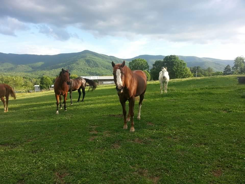 Horsing Around in the Western NC Mountains